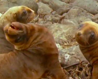 Must Watch: BBC Animal Voice Overs