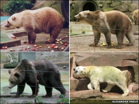Polar/Grizzly Bear Hybrid: We're Obsessed!