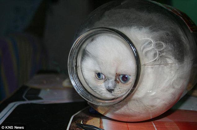 houdini cat