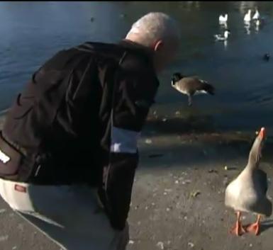 Goose Loves Man!