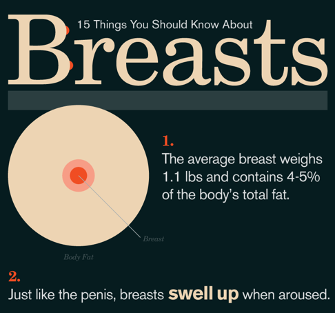 15 Things You Should Know About Breasts Infographic
