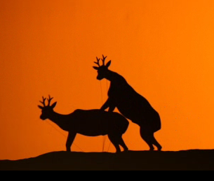Gay Seduction of Male Deer and Antelope: Puppet Show