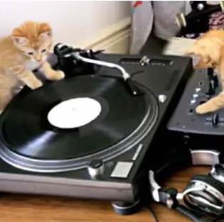 Meow Mix: Kittens on DJ Decks!