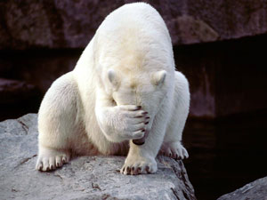 facepalm, animal, polar bear