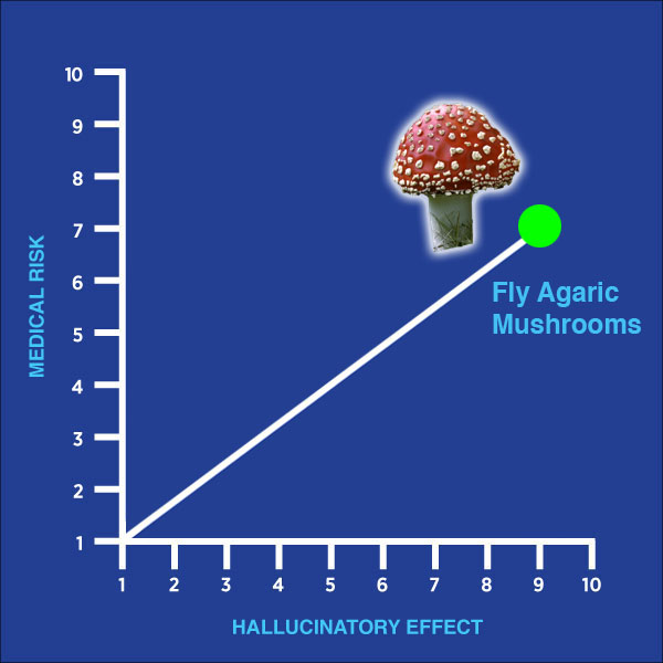 fly agaric mushrooms, drug of the week, chart, medical risk, hallucinatory effect