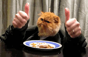 cat, gay blog, thumbs up, bisexual, smile