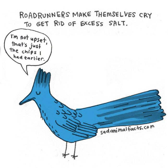 roadrunners, sad, animal facts, cartoon, gay blog, queer, lgbt, funny