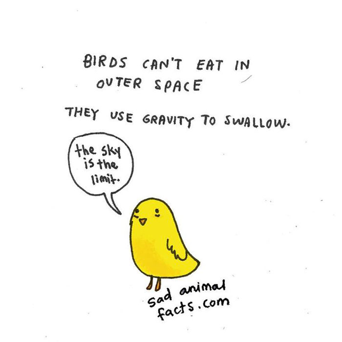sad, animal facts, cartoon, gay blog, queer, lgbt, funny, birds