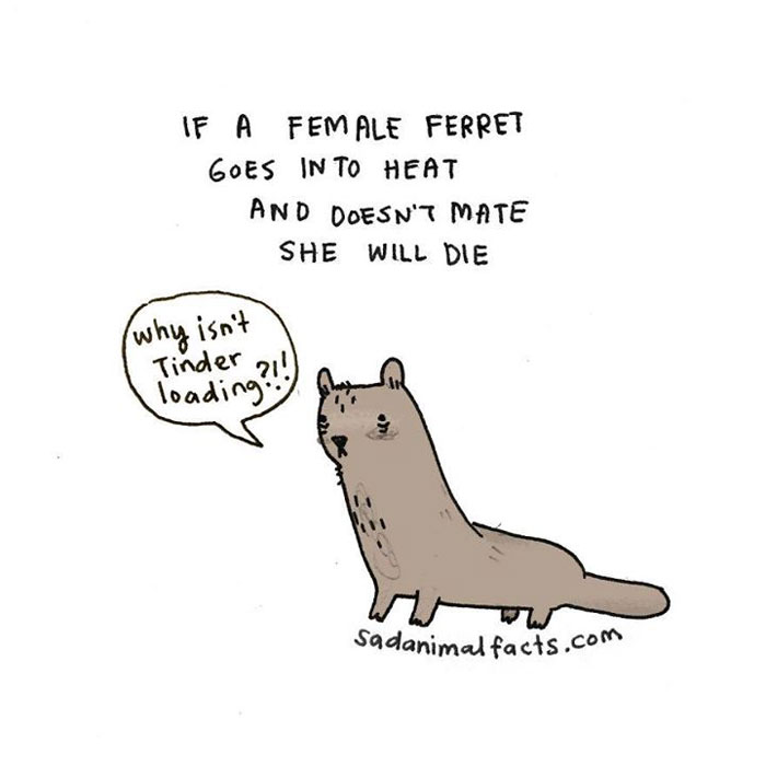 sad, animal facts, cartoon, gay blog, queer, lgbt, funny, ferret