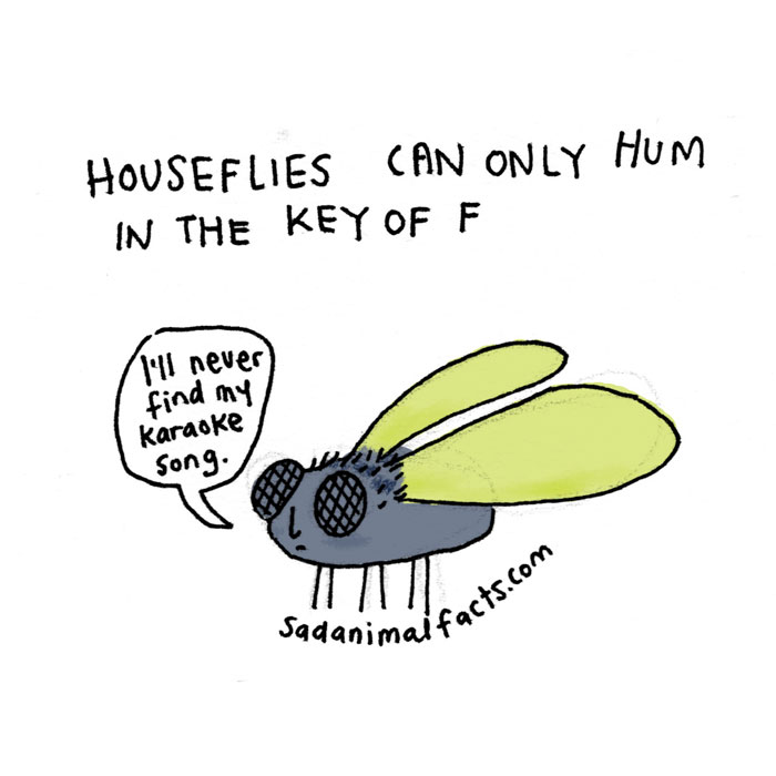 houseflies, sad, animal facts, cartoon, gay blog, queer, lgbt, funny