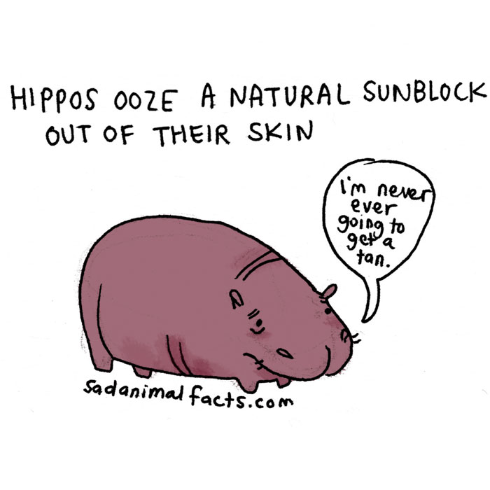 hippos, sad, animal facts, cartoon, gay blog, queer, lgbt, funny