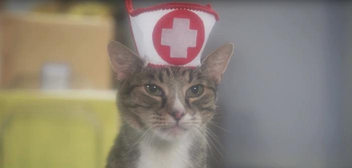 VIDEO: Catty Nurses Highlight A-meow-zing New Feline Soap Opera