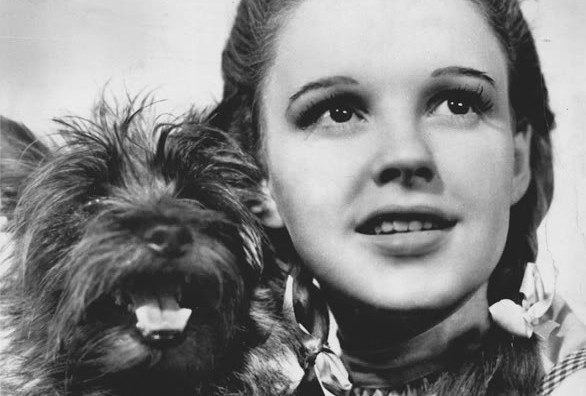 The Navy Once Tried to Hunt Down Dorothy Gale's Secret Gay Army