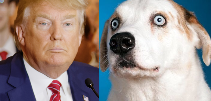 These Cute Animals Fiercely Resist Trump