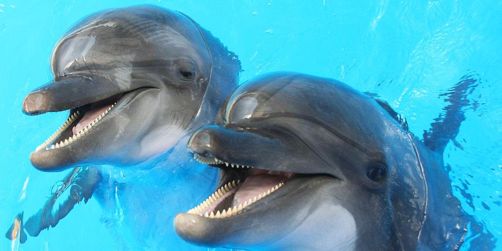 Les dauphins australiens sont homos, bis et font des orgies (juste comme nous)