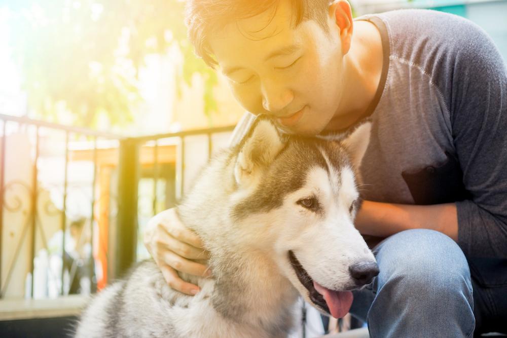 dog better 2