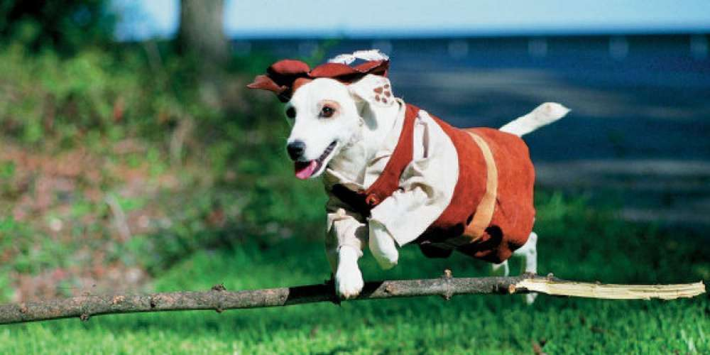 Is Wishbone the Literature-Loving Dog the Secret Gay Icon We Never Knew We Needed?