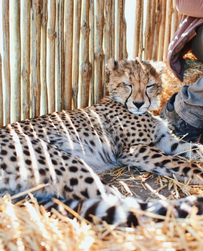 gay cape town cheetah outreach