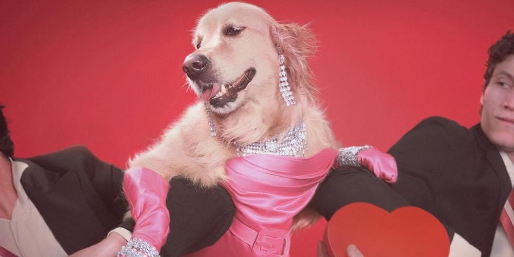 Maxdonna: Le photographe Vincent Flouret recrée des looks célèbres de Madonna avec son chien Max