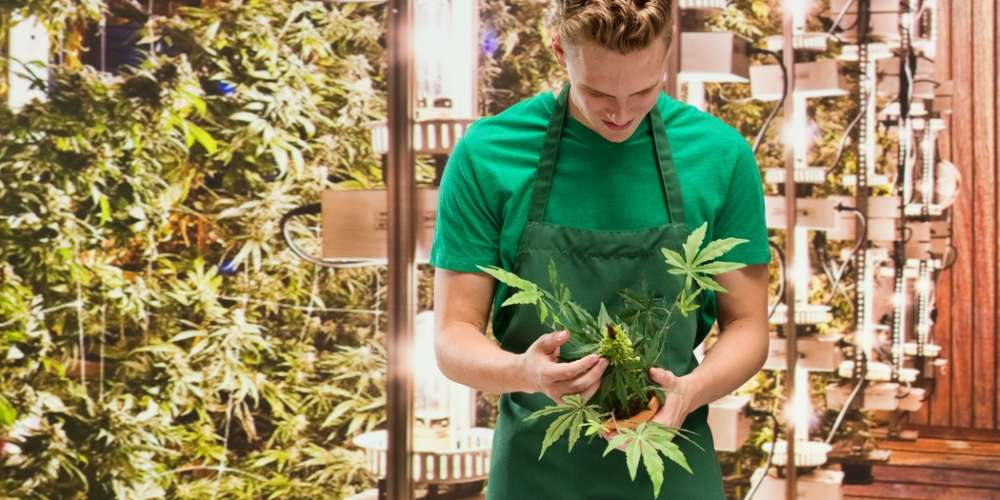 Mormons Want to Use 'Masterpiece Cakeshop' to Block Legal Weed in Utah