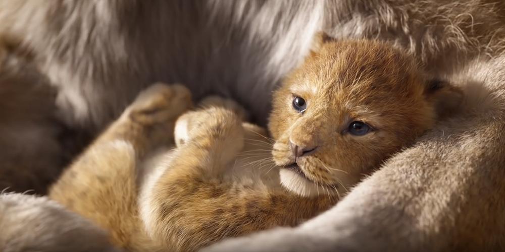 Découvrez le premier teaser du «Roi Lion» nouvelle version