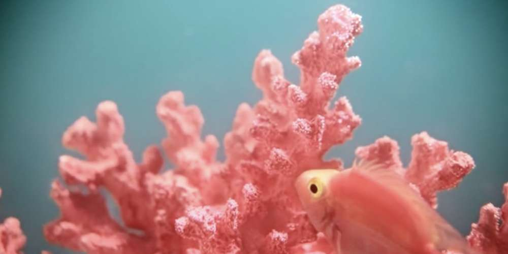 Pantone's Color of the Year for 2019, Living Coral, Is Meant to Make You Optimistic