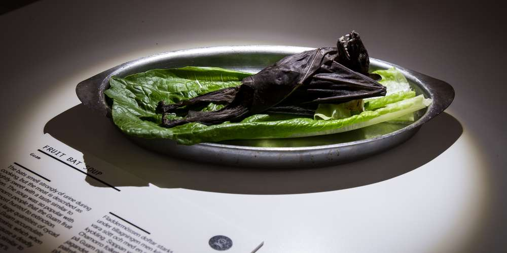 Here Are 6 International Delicacies You'll Find at L.A.'s Disgusting Food Museum