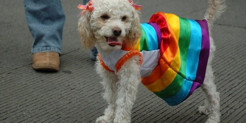 Terceira Cãominhada da Diversidade traz tema Família MultiEspécie durante Parada LGBT de SP