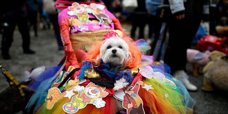 Эти замечательные Собаки  Гордости (Pride Dogs) здесь, чтобы пожелать Вам счастливого июня